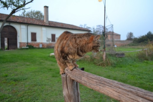 Cats are much beloved in Venice and the lagoon islands.