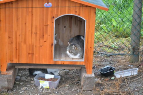 Shelters provided for Torcello's many feline residents. Shelters provided for Torcello's many feline residents.