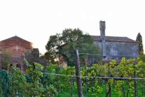 Vineyards on Torcello